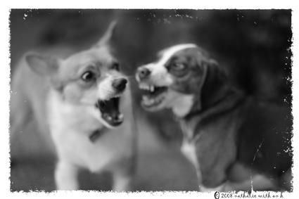 Dog fight
