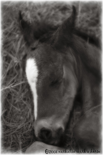 Foal napping