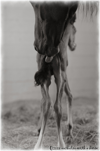 Foal licked by mare