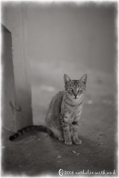 St. Croix cat