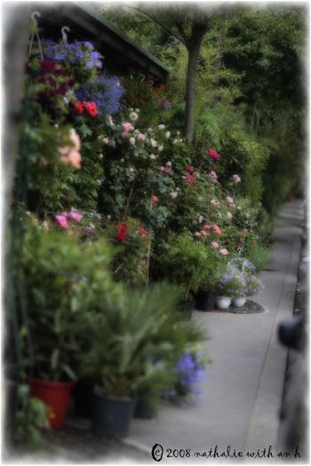 Marche aux Fleurs